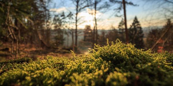 Metsä Woodilla jatkuva asiakaskokemuksen mittaaminen siivittää kehitystyötä